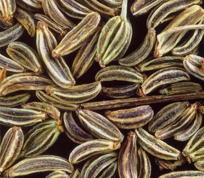 graines carvi